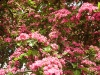 2007-05-14-Hawthorn-in-Barnstaple-3